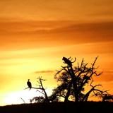 sunset at Mara