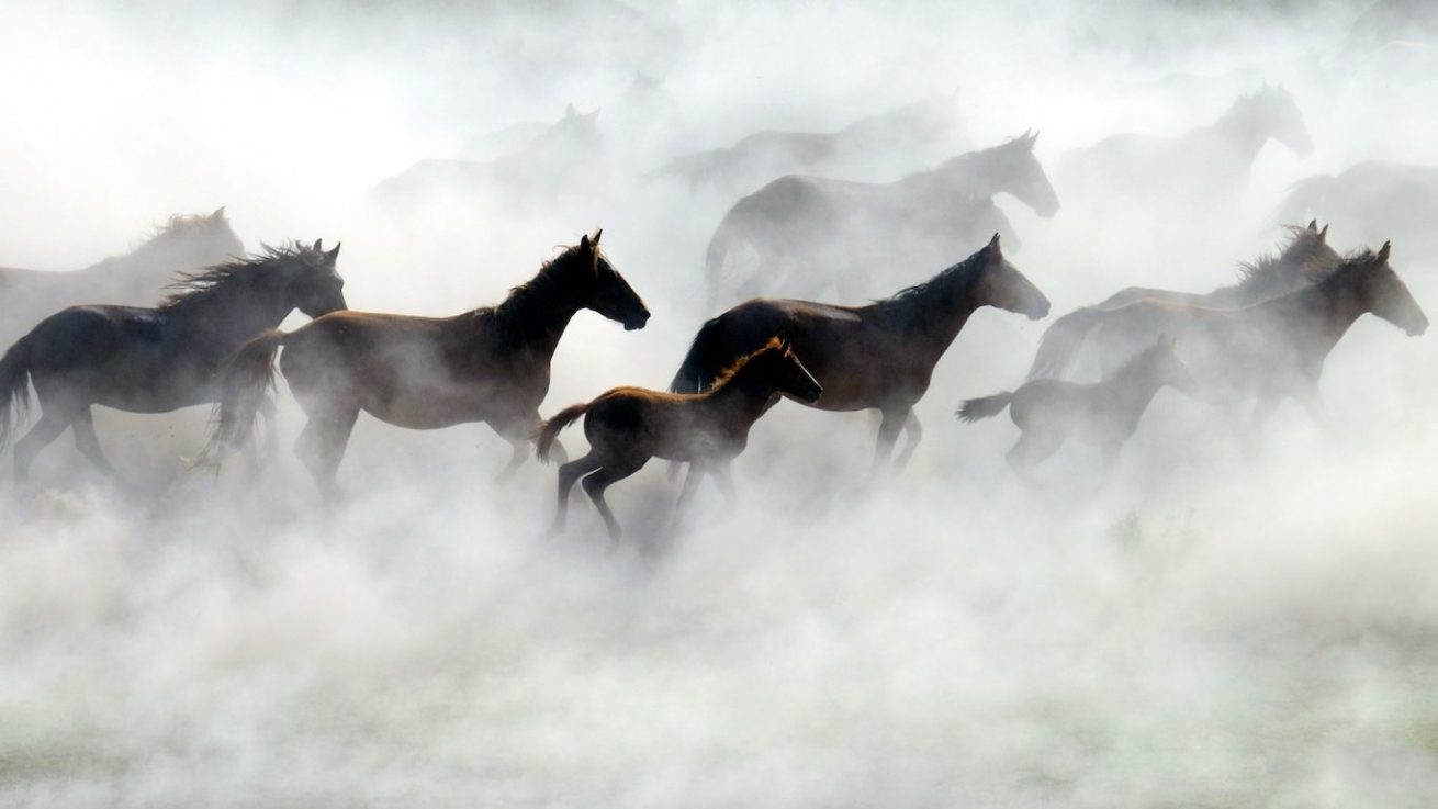 Kayseri-Atlar (4)