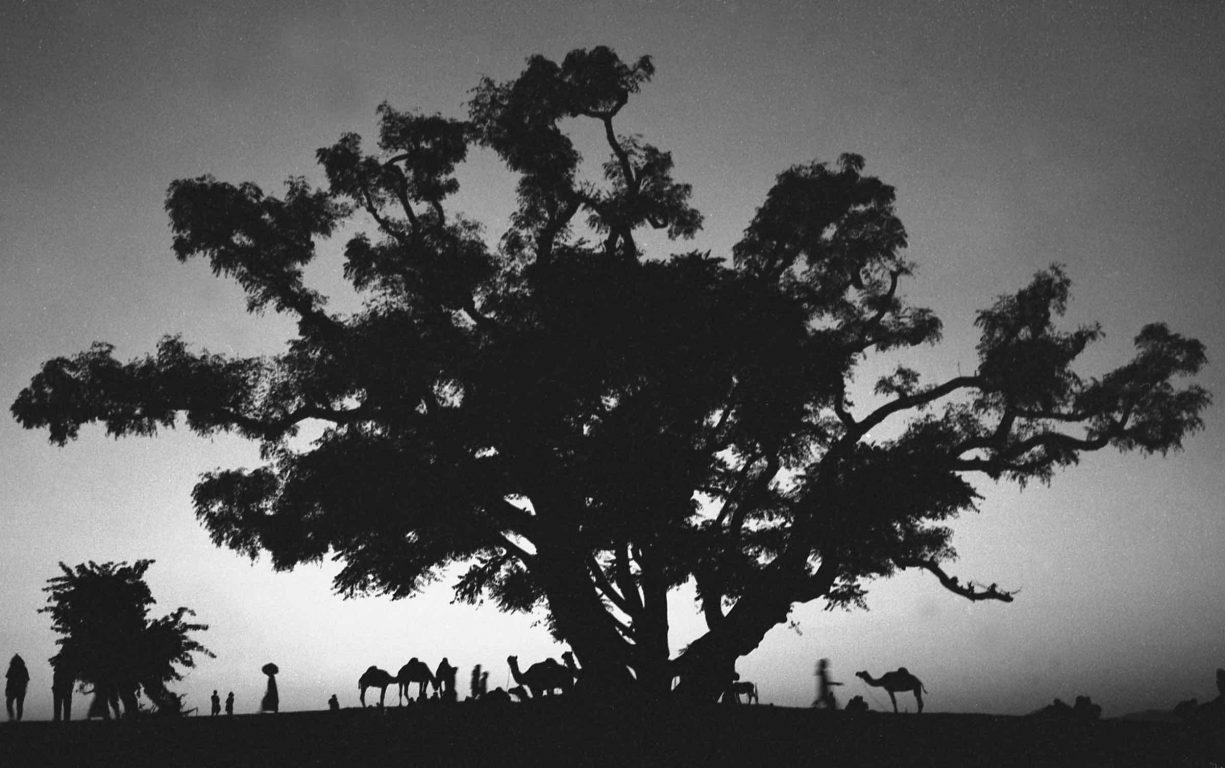 Dusk at Pushkar Festival_Rajasthan_India_1991