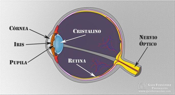 Diagrama del ojo humano
