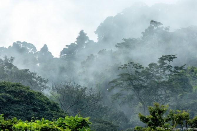 Chiapas, the land of mists