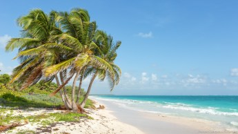 Great Caribbean Sea coast, turquoise water and white sand !
