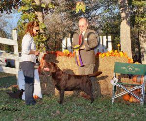GALRC 11-14-15 BOB – Ch. Zinfndel's Spanish Oak (2)