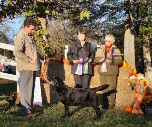 GALRC 11-14-15 RWB, Best Puppy, 1st 9-12 sweeps, 1st 9-12 class – Bellweather Sweetest Taboo (1)