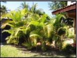 Casa de Sueños Palms
