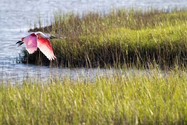 CMR-PINK BIRD