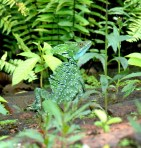 Crested Iguana ss