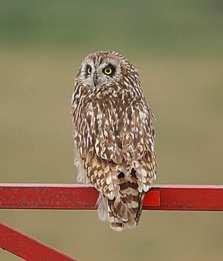 SE Owl AK