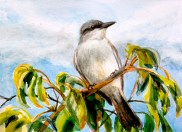 A Gray Kingbird perched on the Red Mangrove through which a Great White Heron forages.