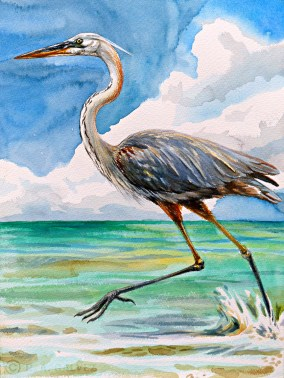 "A ""Wurdemann's"" Heron running along the shallows of Snake Bight, Florida Bay."