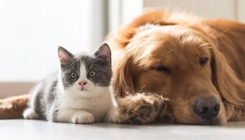 Vira Amigo: participe de curso sobre guarda responsável de animais de estimação