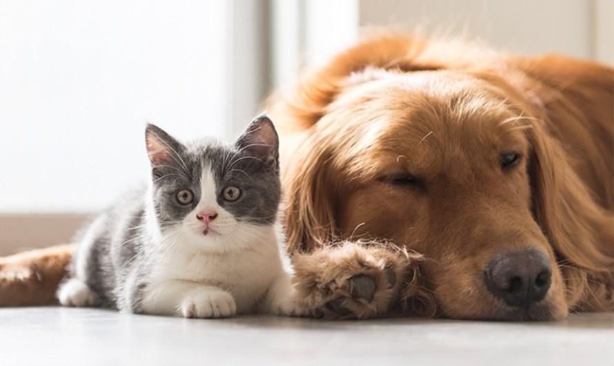 Participe de curso sobre guarda responsável de animais de estimação
