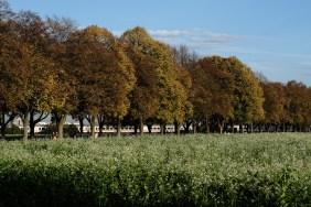 Allee zwischen Schloss Augustusburg und Schloss Falkenlust