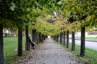 Allee im Schlosspark
