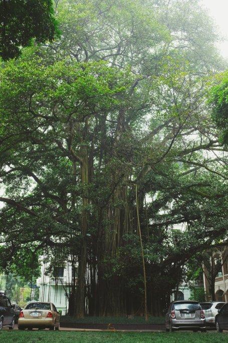 Dschungel Baum mitten in der Stadt?