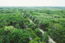 Dschungel von oben