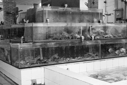 So sehen hier Fisch- und Meeresfrüchterestaruants aus