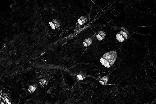 Laternen im Baum