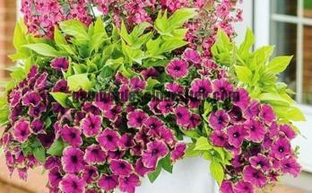 Jasa Pembuatan dan perawatan taman Bandung Jakarta Bunga hias 6