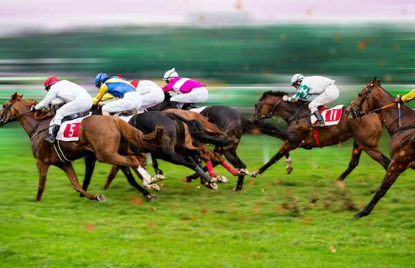 Thoroughbred - Horse racing