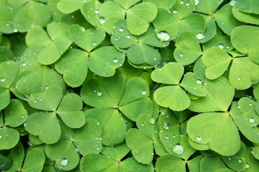 Don't believe only believe in luck