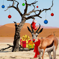 Springolph the Christmas Springbok delivers presents to South African casino players