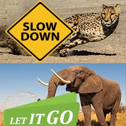 new years resolutions of south african animals