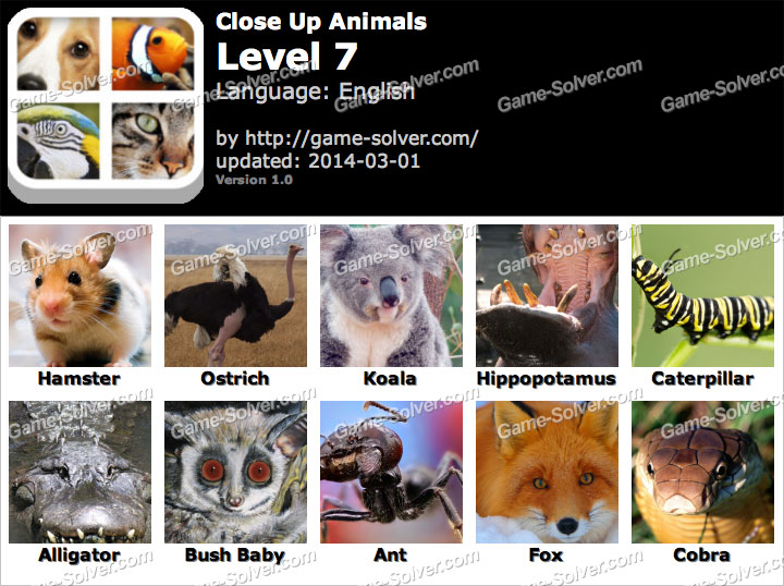Close Up Animals Level 7