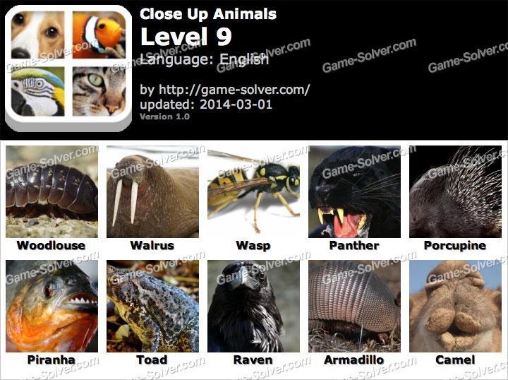 Close Up Animals Level 9