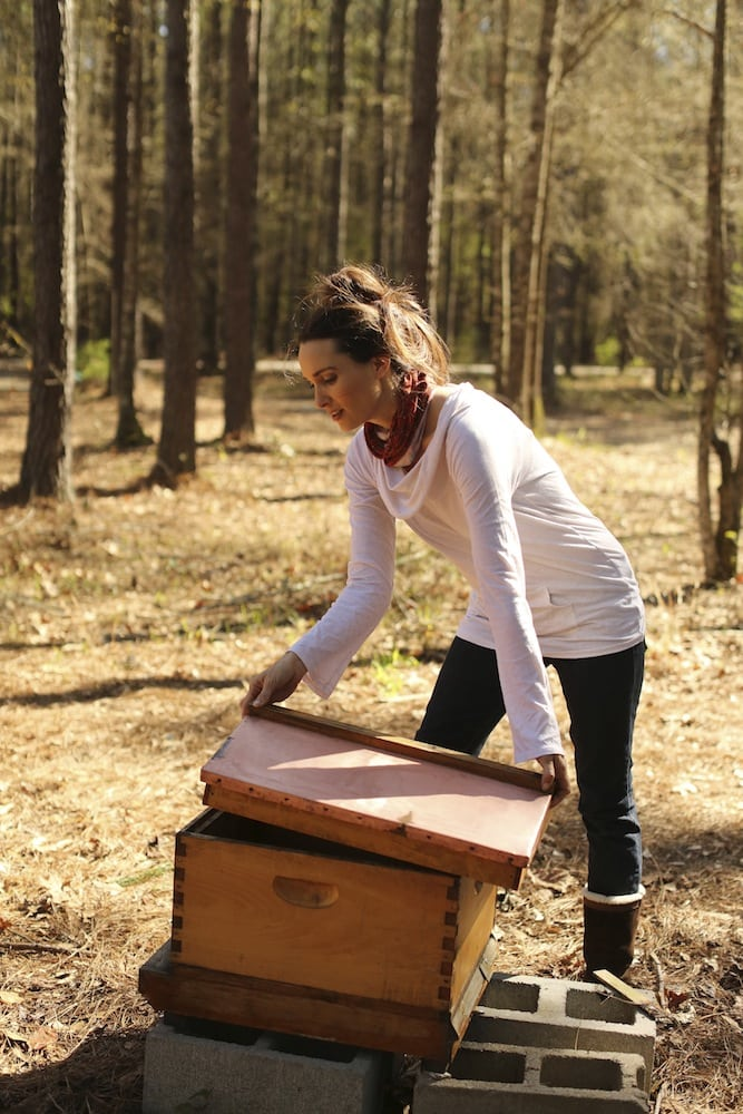 How to Clean Beehives After an Attack of Wax Moths