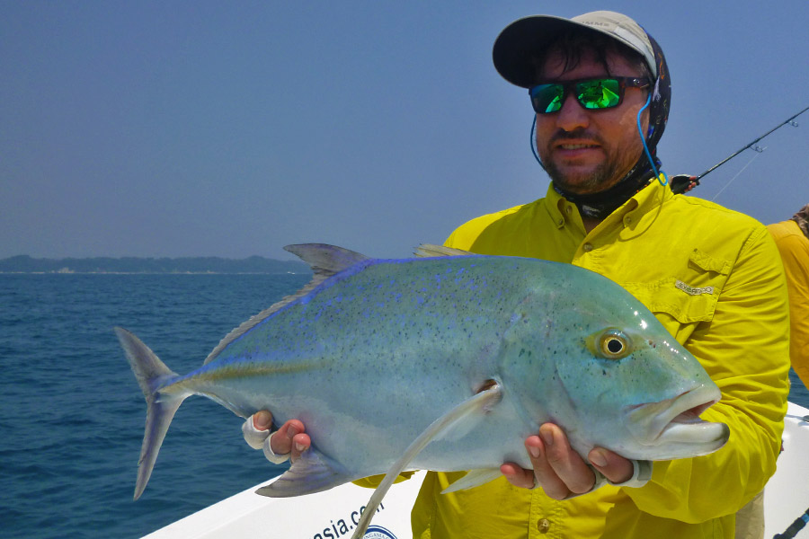blue-fin-trevally_popping_andaman_hammer-head-faube-77m-rod_-shimano-tw-16000-reel_gt-harrier_serhii
