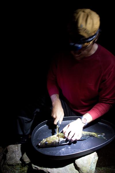 petfishing-4686