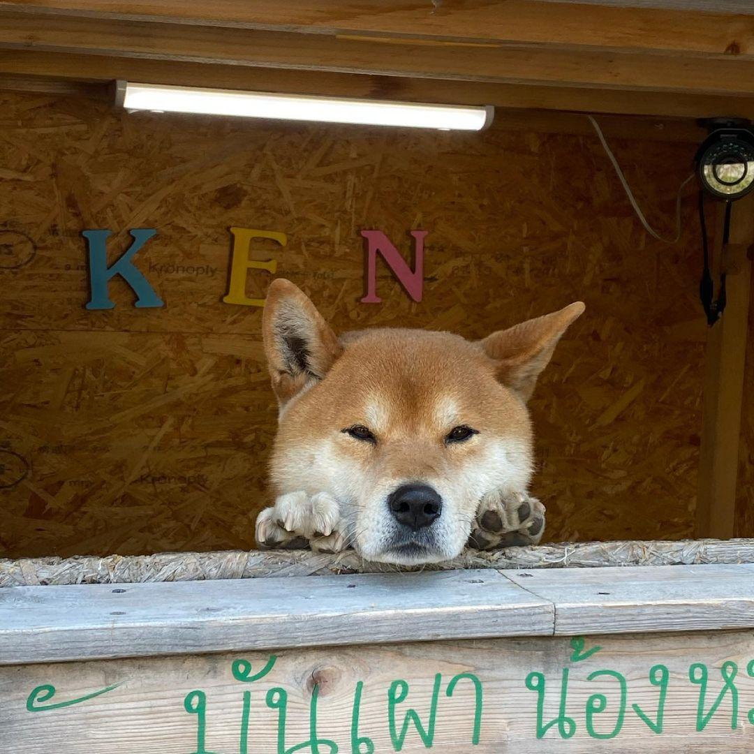 ken tienda