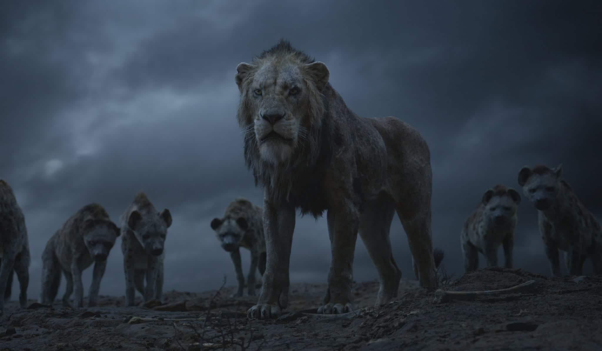 Król Lew3