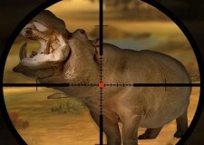 Classic Hippo Hunting