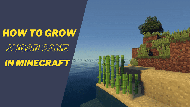 How to grow sugar cane in Minecraft