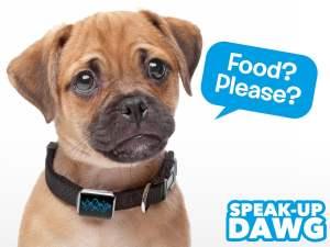 Können Hund noch etwas anderes sagen? (Foto: Coolstuff)