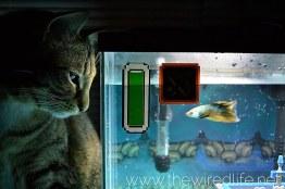 Legend of Zelda Aquarium. (Foto: Etsy)