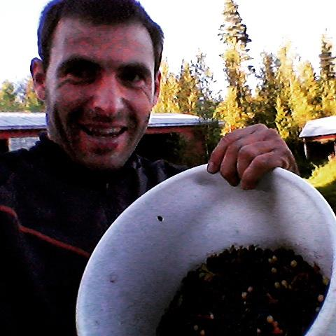 We found blueberries in Finland forests, while traveling by bicycle. A travel without money trip.
