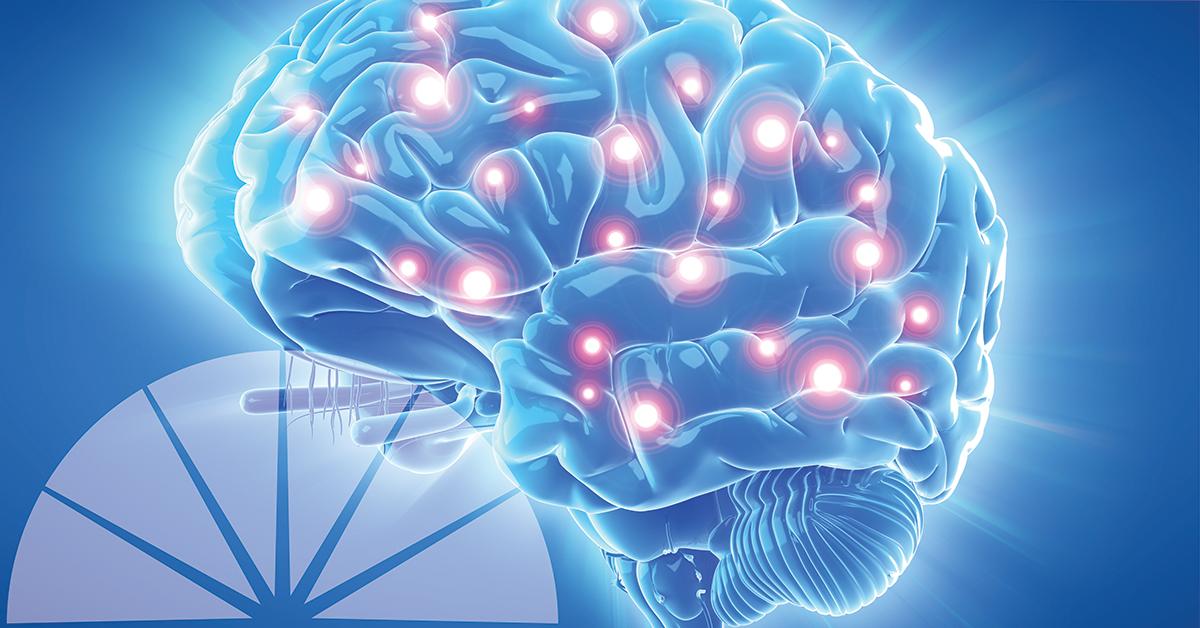 Qué Son Los Neurotransmisores Y Qué Funciones Realizan En Nuestro Cerebro