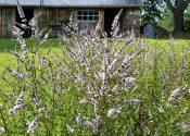 Krydderurter og blomster i skovhaven