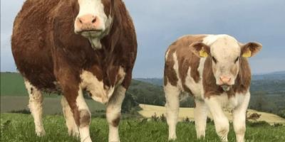 informacion sobre pastos para ganado lechero