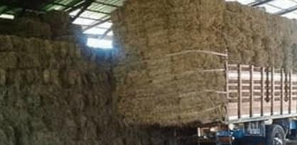 Cuándo cosechar heno de pradera