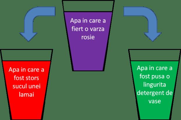 experiment-apa-de-varza-rosie