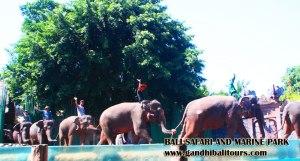 bali-elephant-show