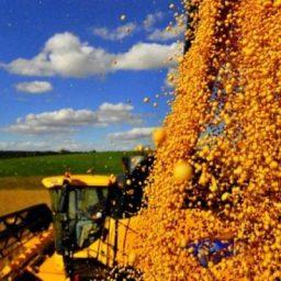 Safra baiana cresce e produção de grãos bate recorde em 2018