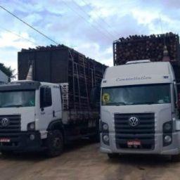 Polícia prende homem com caminhões de madeira furtada
