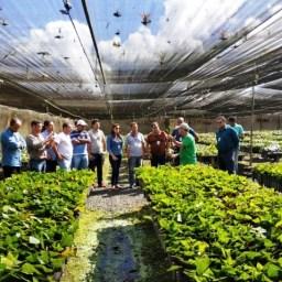 Governo da Bahia distribuiu mudas a agricultores familiares em 101 municípios
