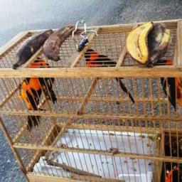 PRF flagra crime ambiental e resgata animais silvestres escondidos em caminhão de carga