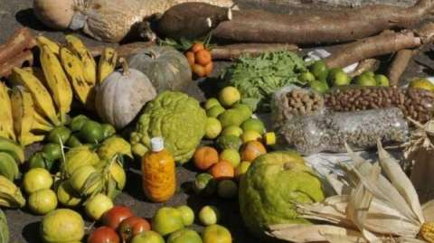 Agricultores familiares terão desconto de até 69% em financiamento pelo Pronaf